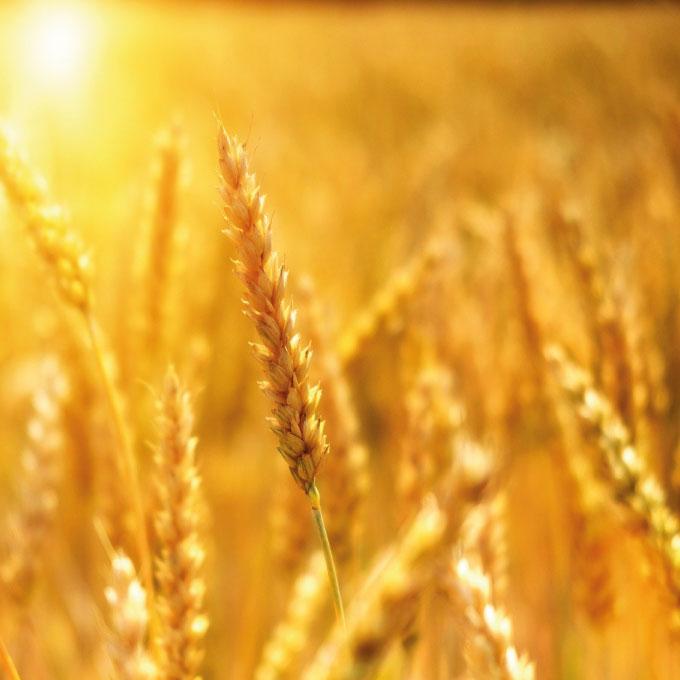 Dracénie Provence Verdon Agglomération - Agriculture